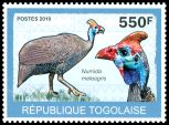 Cl: Helmeted Guineafowl (Numida meleagris) new (2010)