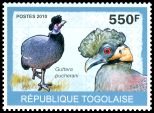 Cl: Crested Guineafowl (Guttera pucherani) new (2010)