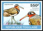 Cl: Greater Painted-snipe (Rostratula benghalensis) new (2010)