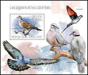 Cl: European Turtle-Dove (Streptopelia turtur) new (2013)