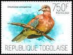 Cl: Laughing Dove (Streptopelia senegalensis) new (2013)