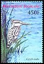 Cl: Pied Kingfisher (Ceryle rudis) new (2007)  [4/17]