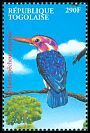 Cl: African Pygmy-Kingfisher (Ispidina picta) new (2000)