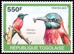 Cl: Northern Carmine Bee-eater (Merops nubicus) new (2010)  [6/58]