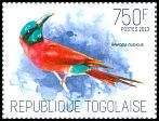 Cl: Northern Carmine Bee-eater (Merops nubicus)(Repeat for this country)  new (2013)