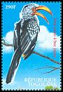 Cl: Eastern Yellow-billed Hornbill (Tockus flavirostris)(Repeat for this country)  new (2000)