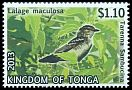 Cl: Polynesian Triller (Lalage maculosa)(Repeat for this country)  SG 1684 (2013)