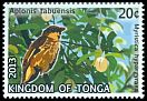 Cl: Polynesian Starling (Aplonis tabuensis)(Repeat for this country)  SG 1678 (2013)