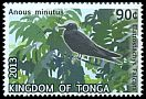 Cl: Black Noddy (Anous minutus) SG 1683 (2013)