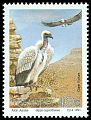 Cl: Cape Griffon (Gyps coprotheres) SG 270 (1991) 80