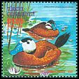 Cl: White-headed Duck (Oxyura leucocephala) <<Dikkuyruk>>  SG 3423c (2000)