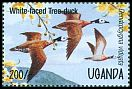 Cl: White-faced Whistling-Duck (Dendrocygna viduata) SG 1442 (1995)