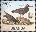 Cl: African Oystercatcher (Haematopus moquini)(Out of range) (not catalogued)  (2013)  [9/16]