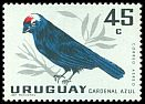 Cl: Diademed Tanager (Stephanophorus diadematus) <<Cardenal Azul>>  SG 1210 (1962) 65