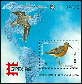 Cl: Red Knot (Calidris canutus) SG 2272 (1996) 875