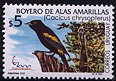 Cl: Golden-winged Cacique (Cacicus chrysopterus) SG 2633 (2000) 250