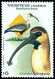Cl: Buff-necked Ibis (Theristicus caudatus) <<Bandurria baya>>  SG 2437 (1998) 275