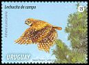 Cl: Burrowing Owl (Athene cunicularia) <<Lechucita de campo>> (Repeat for this country)  new (2015)