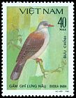 Cl: Mountain Imperial-Pigeon (Ducula badia) SG 408 (1981) 35