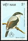 Cl: White-browed Shrike-Babbler (Pteruthius flaviscapis) SG 964 (1986) 5