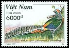 Cl: Lady Amherst's Pheasant (Chrysolophus amherstiae)(Out of range)  SG 2150 (1997)