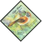 Cl: Greater Necklaced Laughingthrush (Garrulax pectoralis) SG 2479 (2002)  [1/15]