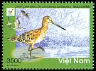 Cl: Asian Dowitcher (Limnodromus semipalmatus) new (2013)  [5/7]