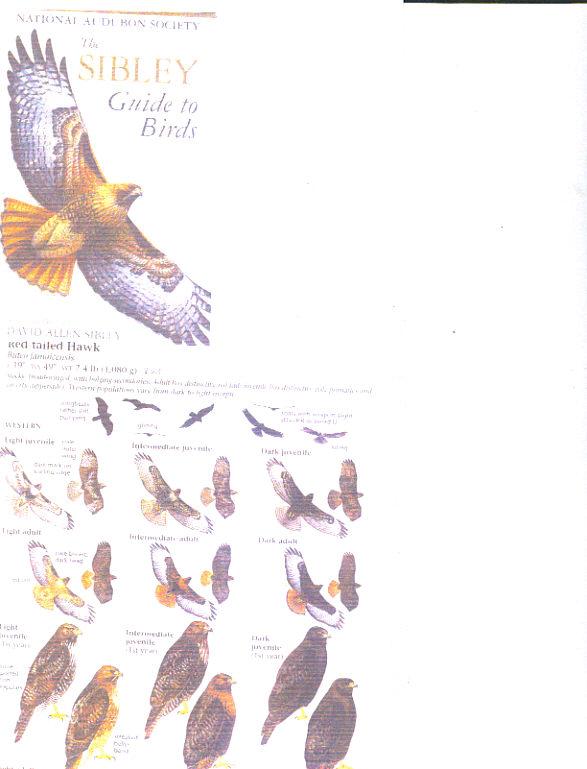 Sibley Backyard Birding Flashcards : 100 Common Birds of ...